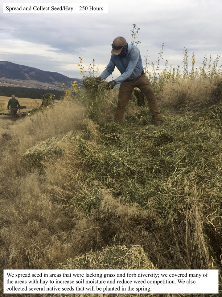 We spread seed in areas that were lacking grass and forb diversity; we covered many of the areas with hay to increase soil moisture and reduce weed competition