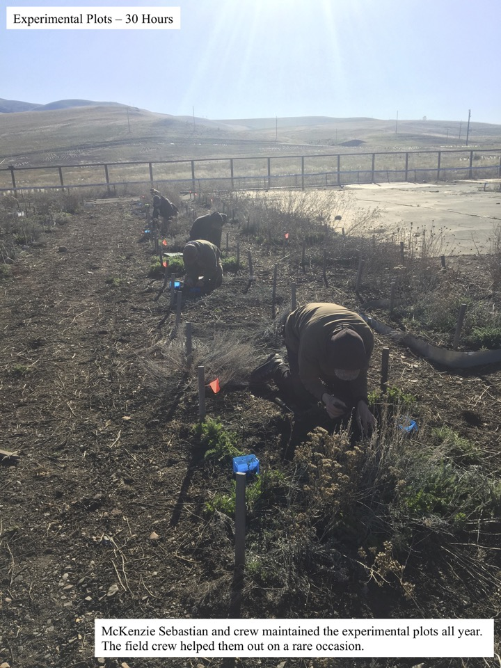 McKenzie Sebastian and crew maintained the experimental plots all year.