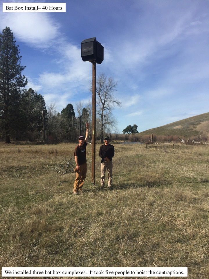 Bat Box Install– 40 Hours