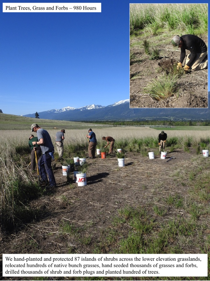 Plant Trees, Grass and Forbs – 980 Hours