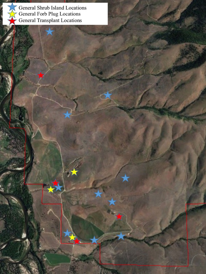 General Shrub Island Locations General Forb Plug Locations  General Transplant Locations