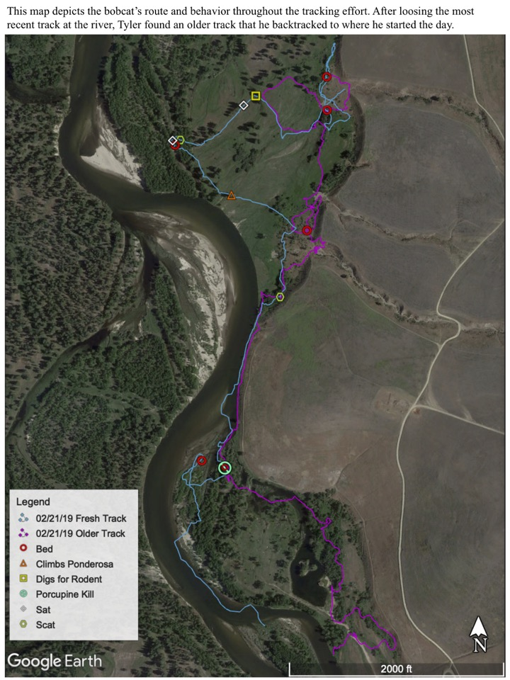 This map depicts the bobcat's route and behavior throughout the tracking effort.