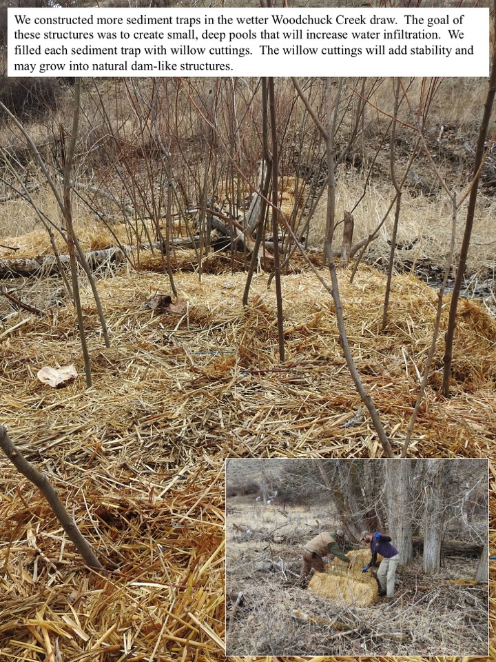 We constructed more sediment traps in the wetter Woodchuck Creek draw.