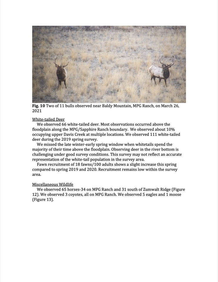 Two of 11 bulls observed near Baldy Mountain