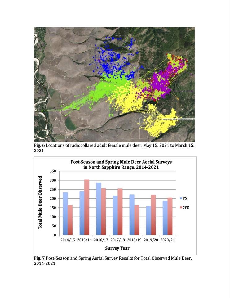 Locations of radio-collared adult female mule deer,