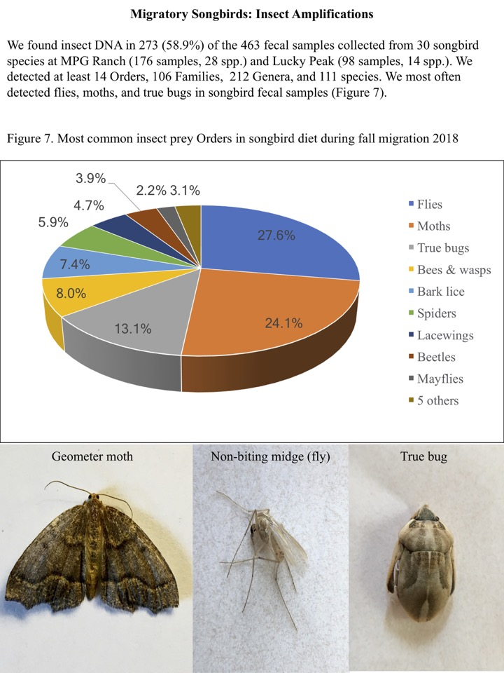 We found insect DNA in 273 (58.9%) of the 463 fecal samples collected from 30 songbird species at MPG Ranch (176 samples, 28 spp.) and Lucky Peak (98 samples, 14 spp.).
