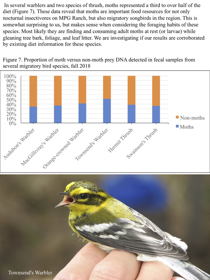 In several warblers and two species of thrush, moths represented a third to over half of the diet (Figure 7).