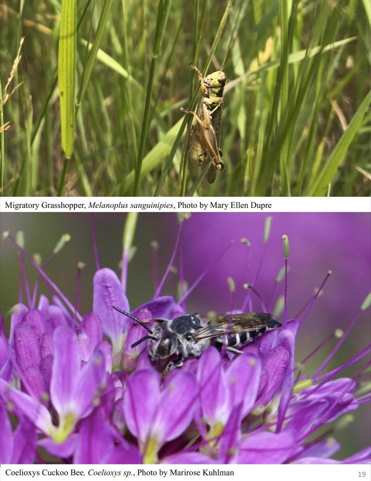 Grasshopper & Bee