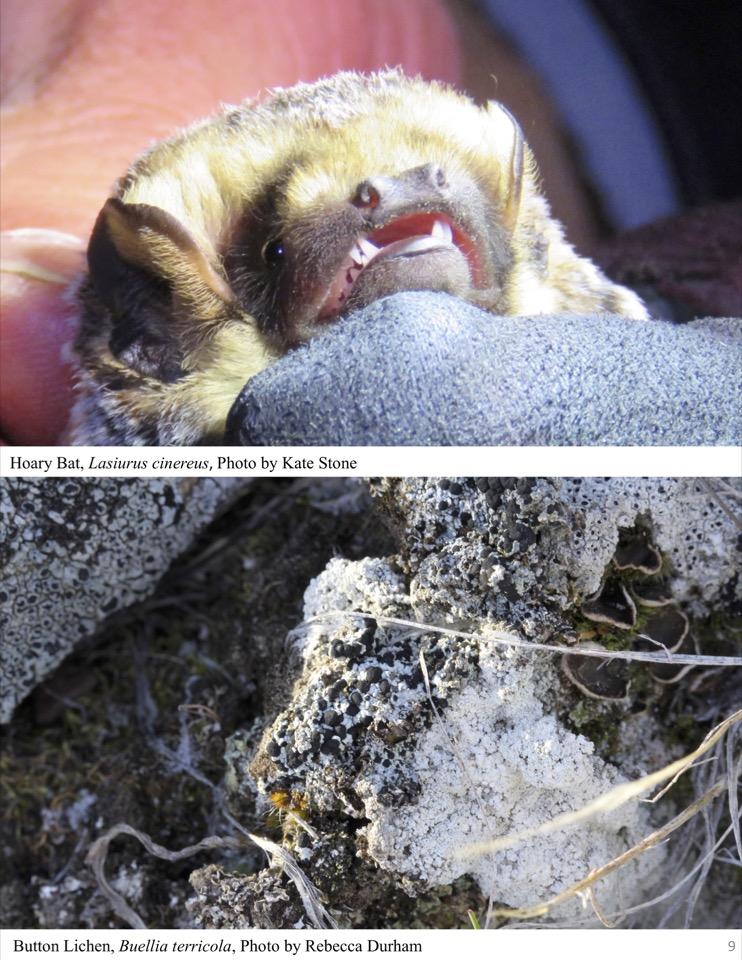 Bat & Lichen