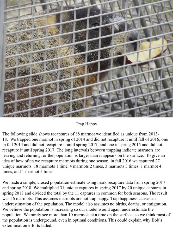 To give an idea of how often we recapture marmots during one season, in fall 2016 we captured 27 unique marmots: 18 marmots 1 time, 4 marmots 2 times, 3 marmots 3 times, 1 marmot 4 times, and 1 marmot 5 times.