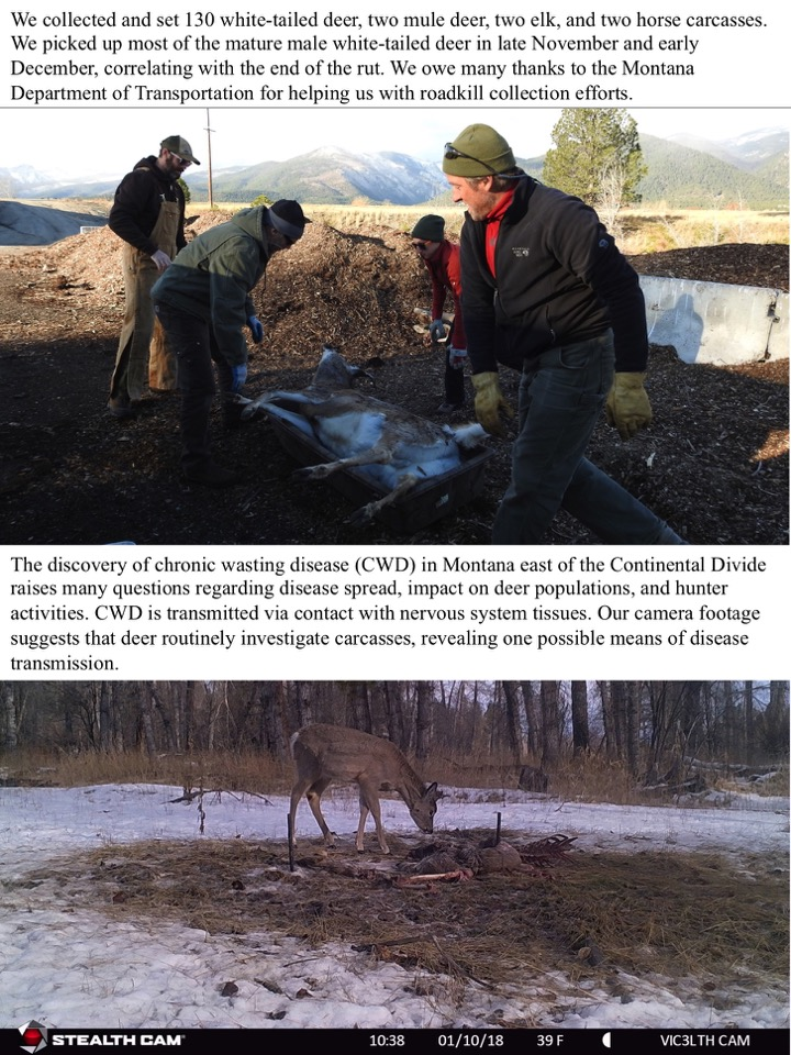 We collected and set 130 white-tailed deer, two mule deer, two elk, and two horse carcasses.