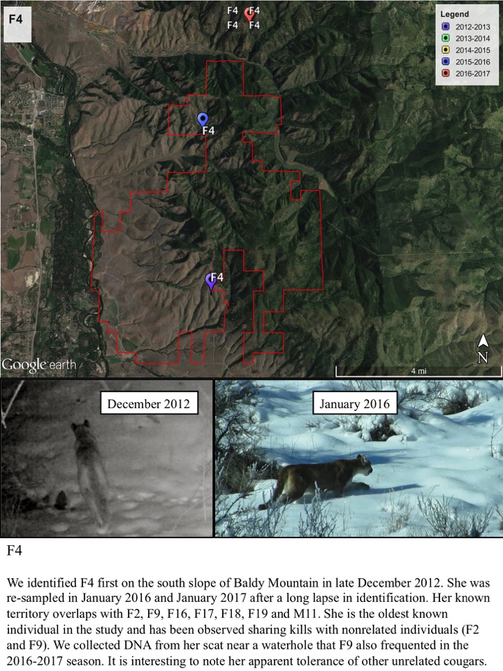 We identified F4 first on the south slope of Baldy Mountain in late December 2012