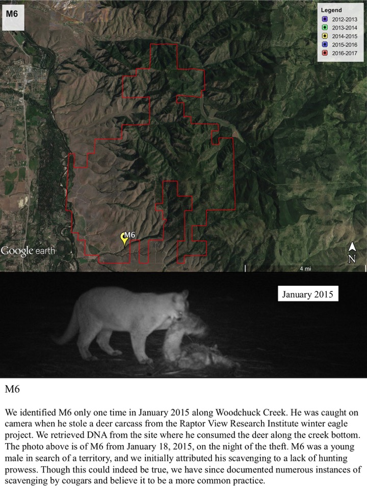 We identified M6 only one time in January 2015 along Woodchuck Creek.