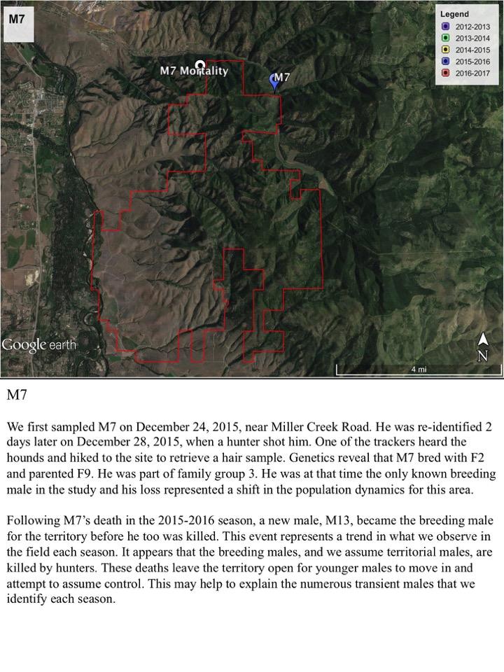 We first sampled M7 on December 24, 2015, near Miller Creek Road.