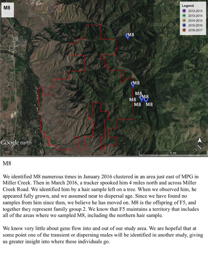We identified M8 numerous times in January 2016 clustered in an area just east of MPG in Miller Creek.