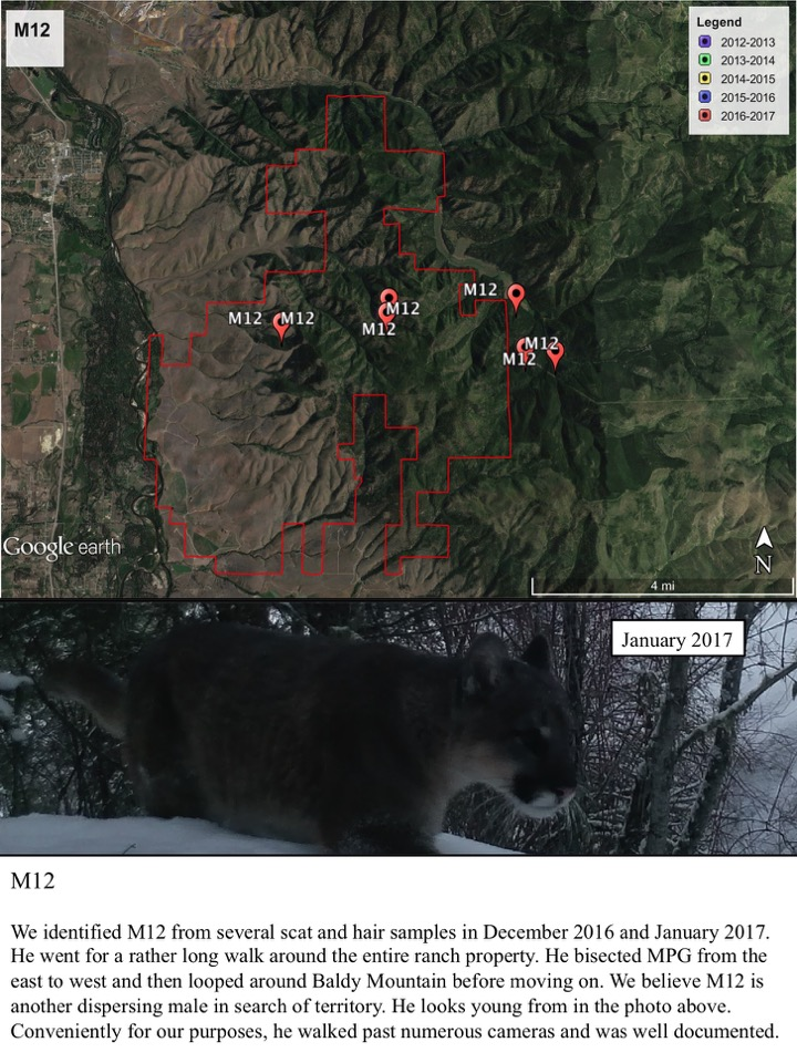 We identified M12 from several scat and hair samples in December 2016 and January 2017.