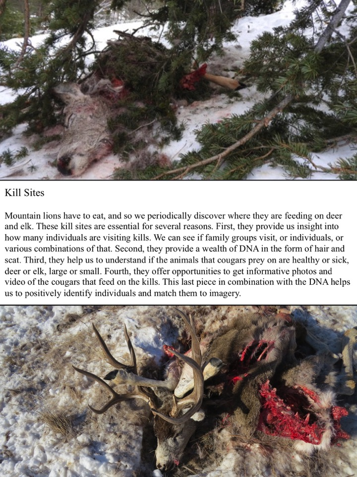 Kill Sites