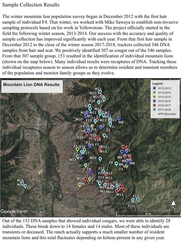 The winter mountain lion population survey began in December 2012 with the first hair sample of individual F4.