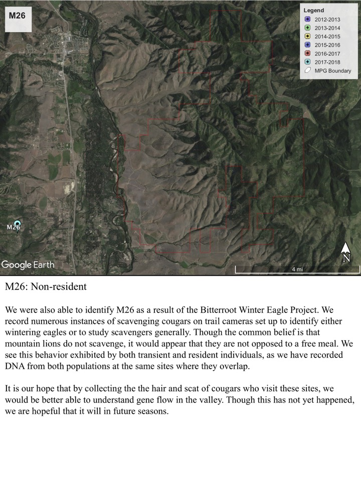 We were also able to identify M26 as a result of the Bitterroot Winter Eagle Project.