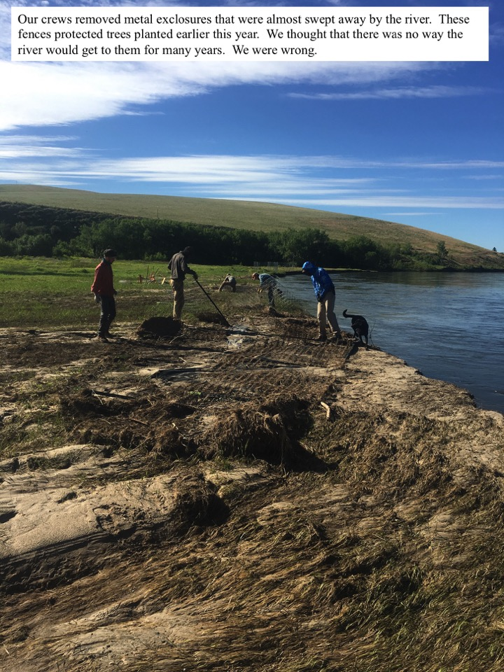 Our crews removed metal exclosures that were almost swept away by the river.