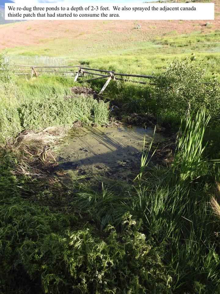 We re-dug three ponds to a depth of 2-3 feet.