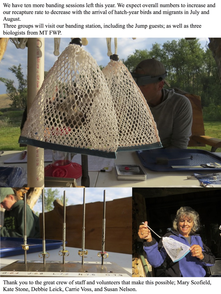 We have ten more banding sessions left this year. We expect overall numbers to increase and our recapture rate to decrease with the arrival of hatch-year birds and migrants in July and August.