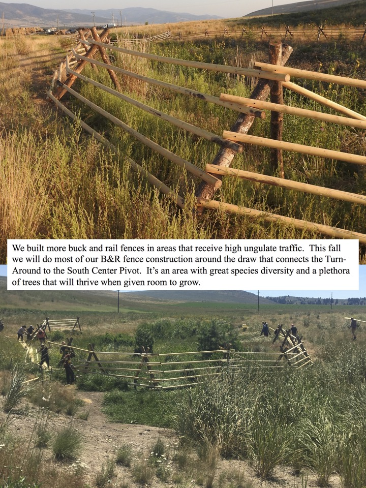 We built more buck and rail fences in areas that receive high ungulate traffic.