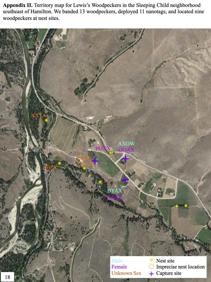 Appendix II. Territory map for Lewis's Woodpeckers in the Sleeping Child neighborhood southeast of Hamilton.