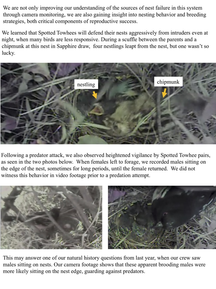 We are not only improving our understanding of the sources of nest failure in this system through camera monitoring, we are also gaining insight into nesting behavior and breeding strategies, both critical components of reproductive success