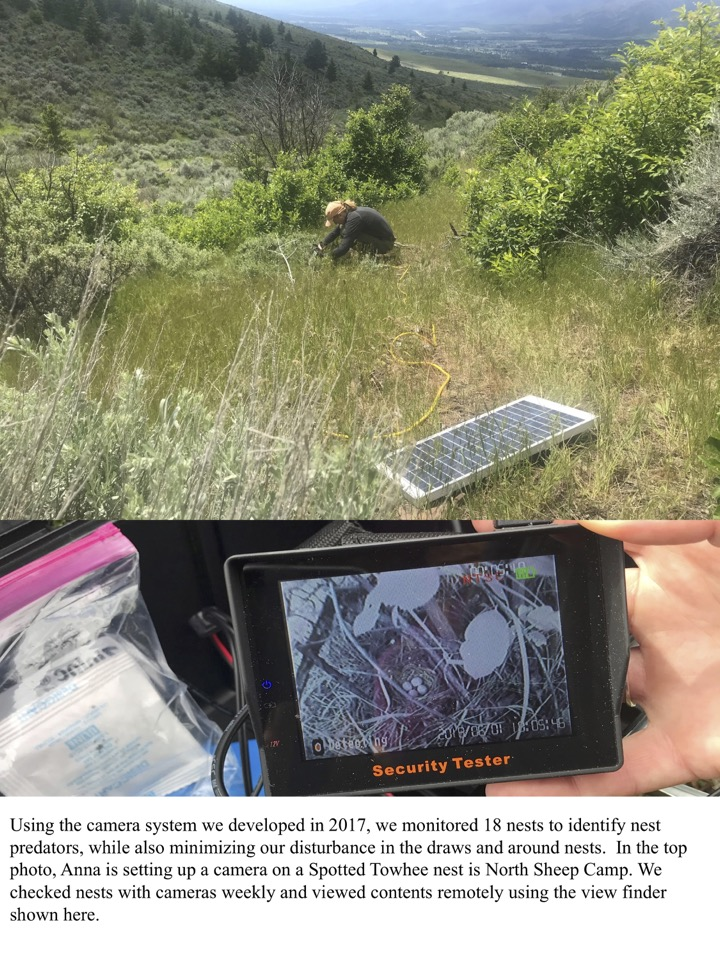 Using the camera system we developed in 2017, we monitored 18 nests to identify nest predators, while also minimizing our disturbance in the draws and around nests