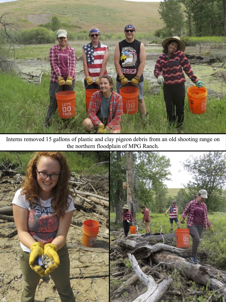 Interns removed 15 gallons of plastic and clay pigeon debris from an old shooting range on the northern floodplain of MPG Ranch.