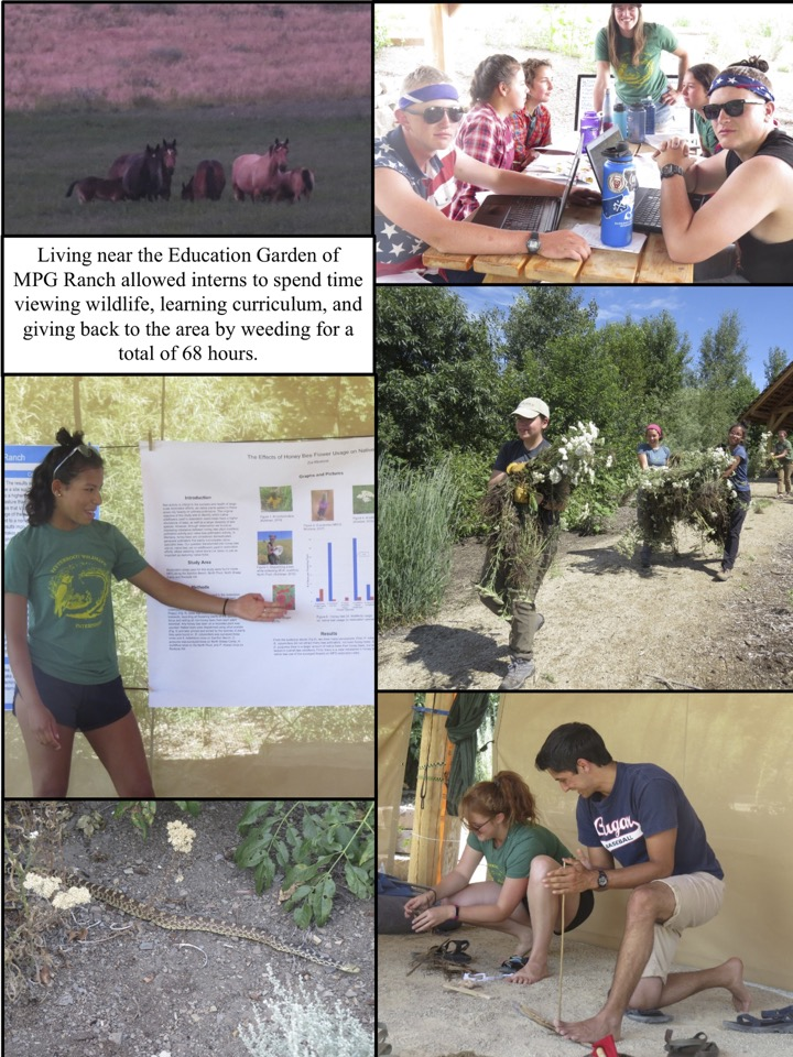 Living near the Education Garden of MPG Ranch allowed interns to spend time viewing wildlife, learning curriculum, and giving back to the area by weeding for a total of 68 hours.