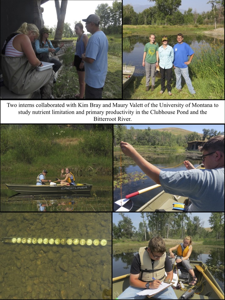 Two interns collaborated with Kim Bray and Maury Valett of the University of Montana to study nutrient limitation and primary productivity in the Clubhouse Pond and the Bitterroot River.