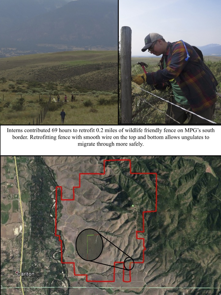 Interns contributed 69 hours to retrofit 0.2 miles of wildlife friendly fence on MPG's south border. Retrofitting fence with smooth wire on the top and bottom allows ungulates to migrate through more safely