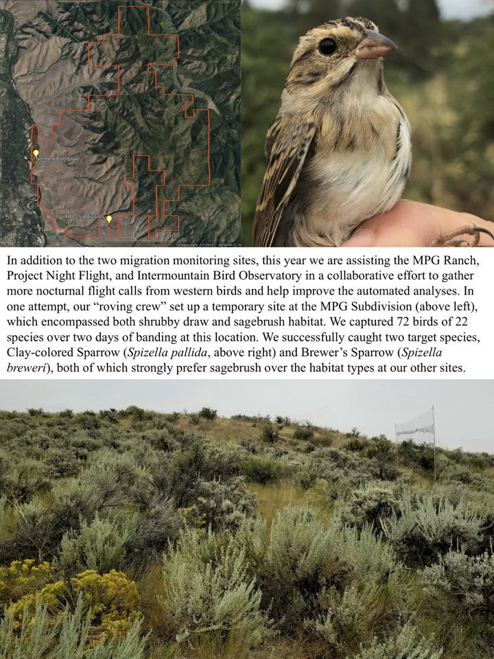 In addition to the two migration monitoring sites, this year we are assisting the MPG Ranch, Project Night Flight, and Intermountain Bird Observatory in a collaborative effort to gather more nocturnal flight calls from western birds