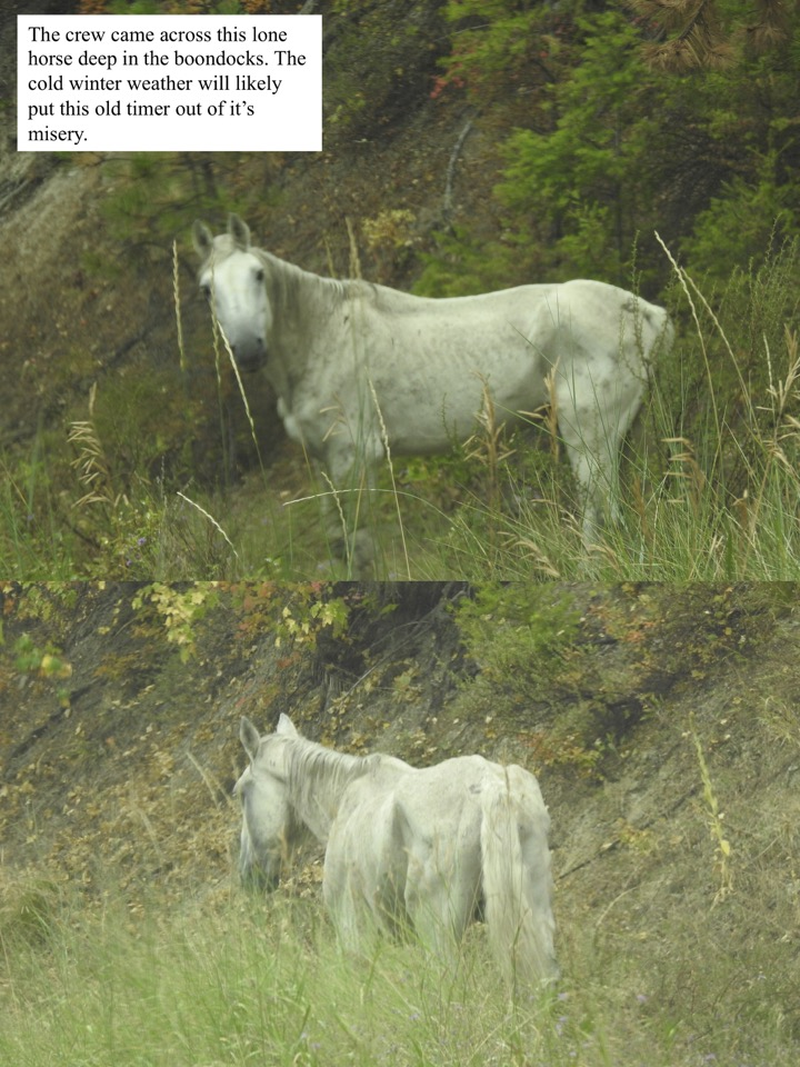 The crew came across this lone horse deep in the boondocks.
