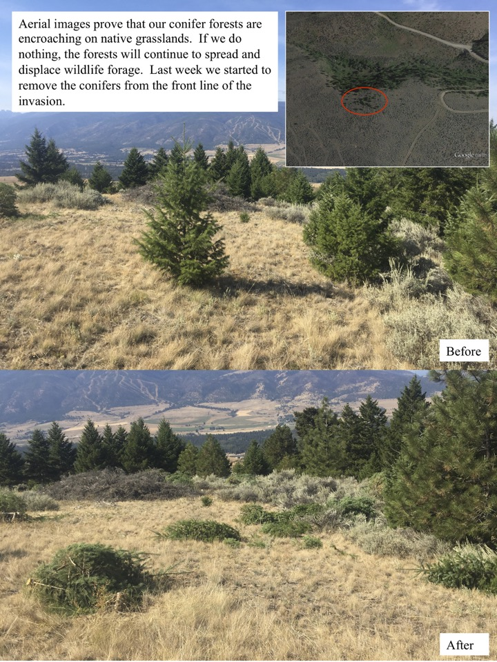 Aerial images prove that our conifer forests are encroaching on native grasslands.