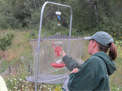 2017 Hummingbird Banding Images 3
