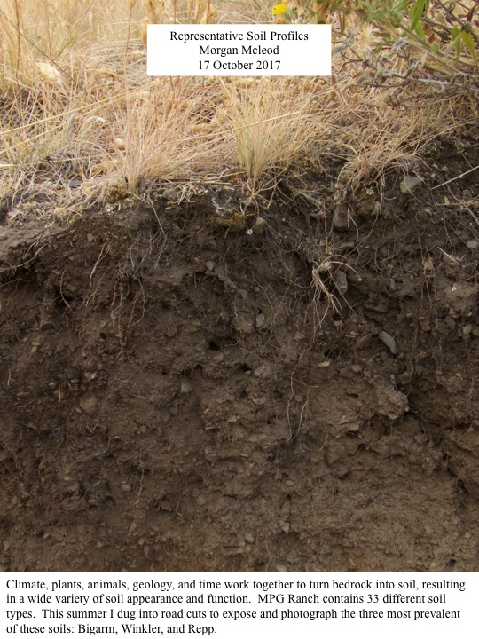 This summer I dug into road cuts to expose and photograph the three most prevalent of these soils: Bigarm, Winkler, and Repp.