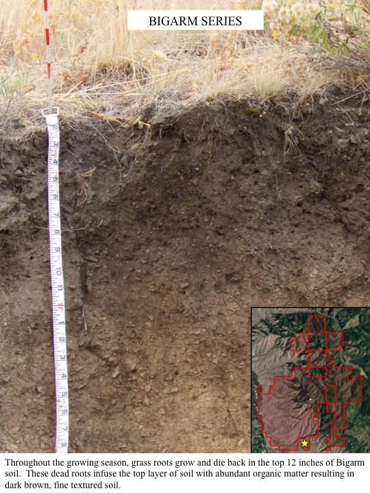 Throughout the growing season, grass roots grow and die back in the top 12 inches of Bigarm soil.