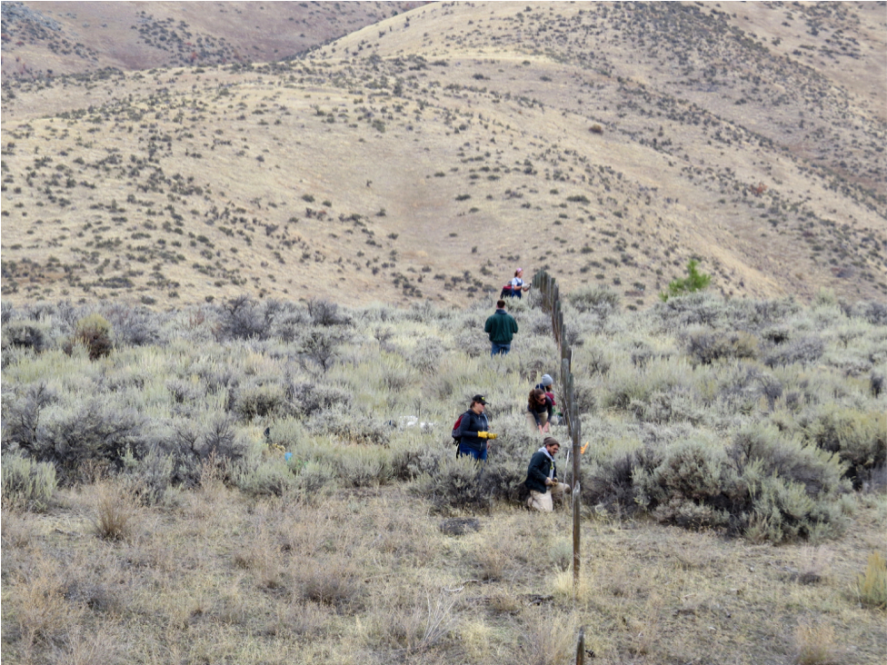Volunteers worked on the southeastern border of MPG where the property abuts Red Quill Ranch.