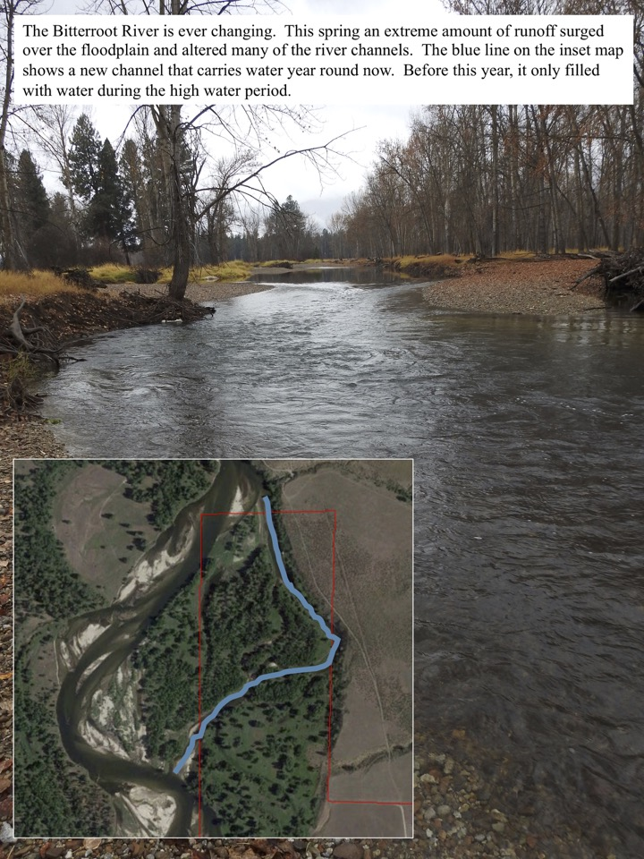 The Bitterroot River is ever changing. This spring an extreme amount of runoff surged over the floodplain and altered many of the river channels.