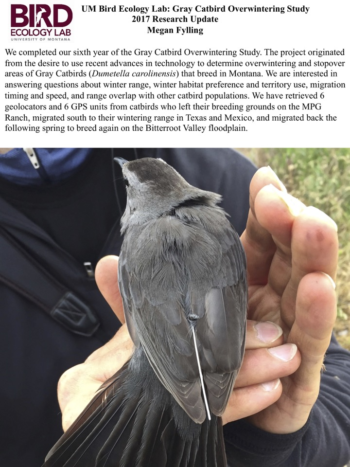 We are interested in answering questions about winter range, winter habitat preference and territory use, migration timing and speed, and range overlap with other catbird populations.