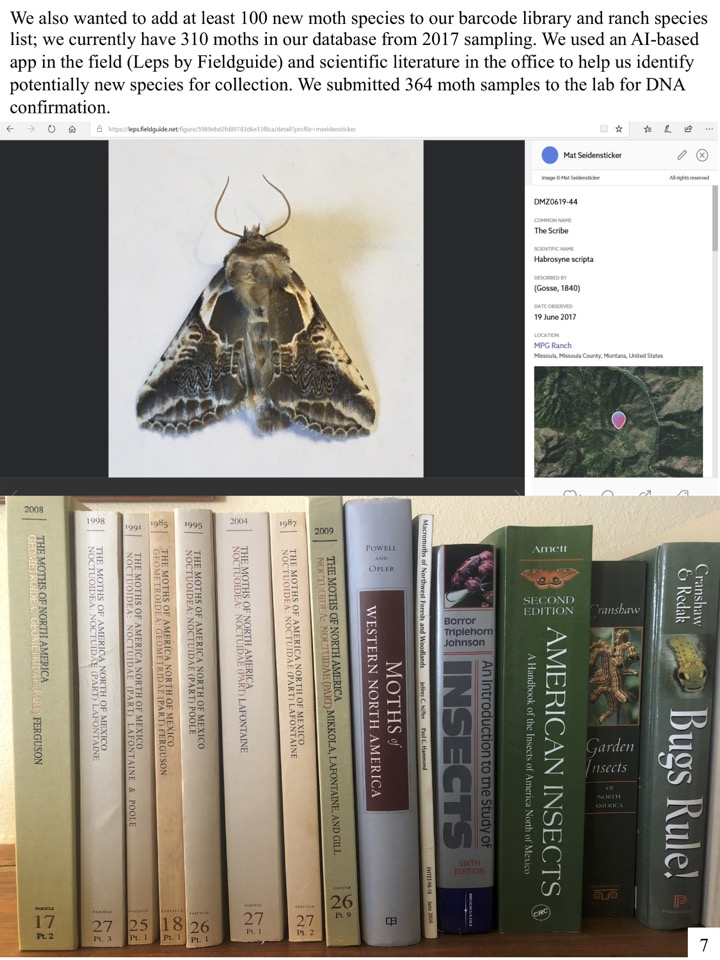 We also wanted to add at least 100 new moth species to our barcode library and ranch species list; we currently have 310 moths in our database from 2017 sampling.
