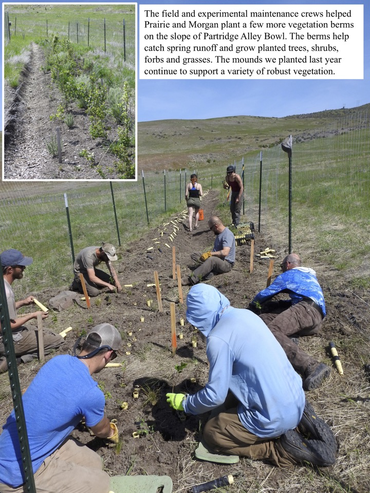 The field and experimental maintenance crews helped Prairie and Morgan plant a few more vegetation berms on the slope of Partridge Alley Bowl.
