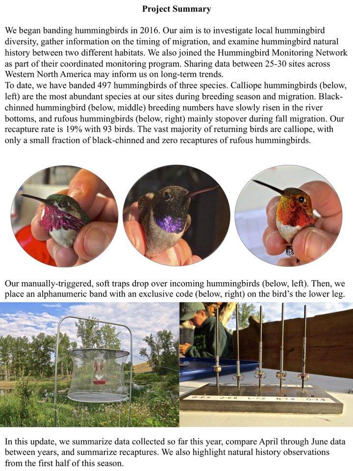 Our aim is to investigate local hummingbird diversity, gather information on the timing of migration, and examine hummingbird natural history between two different habitats.