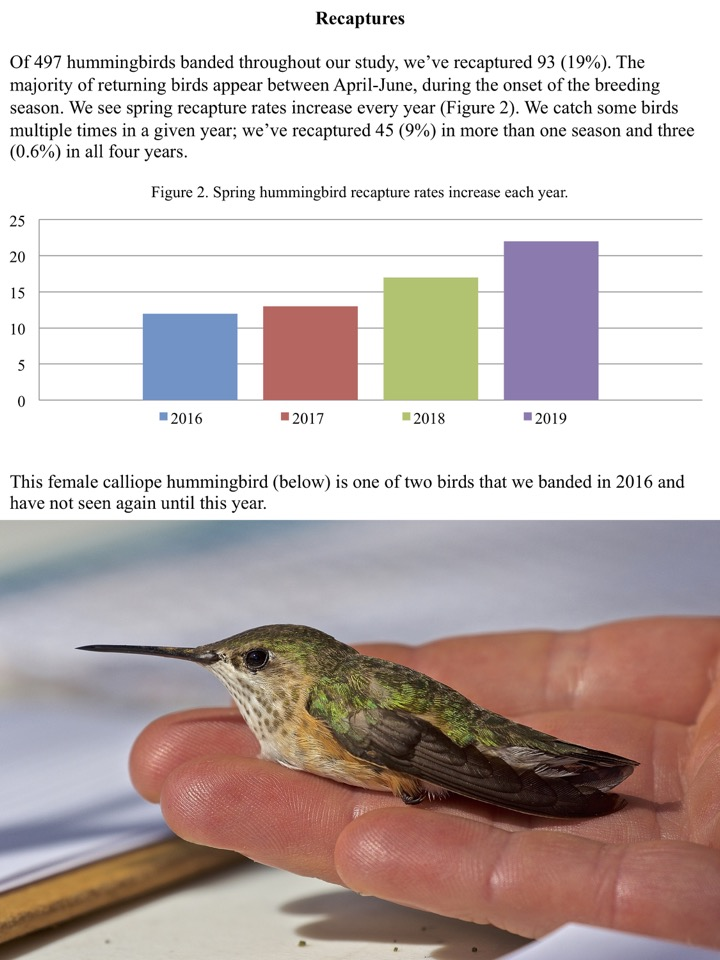 Of 497 hummingbirds banded throughout our study, we've recaptured 93