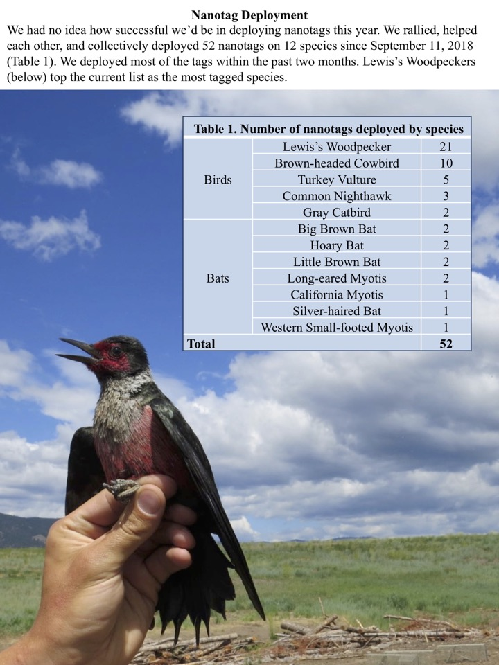 We collectively deployed 52 nanotags on 12 species since September 11, 2018