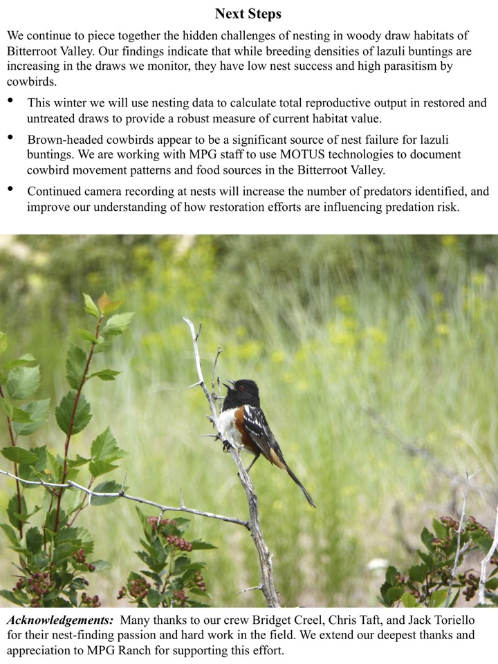We continue to piece together the hidden challenges of nesting in woody draw habitats of Bitterroot Valley.