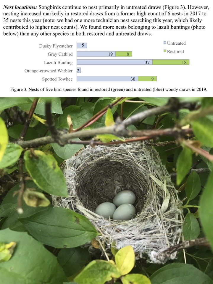 nesting increased markedly in restored draws from a former high count of 6 nests in 2017 to 35 nests this year